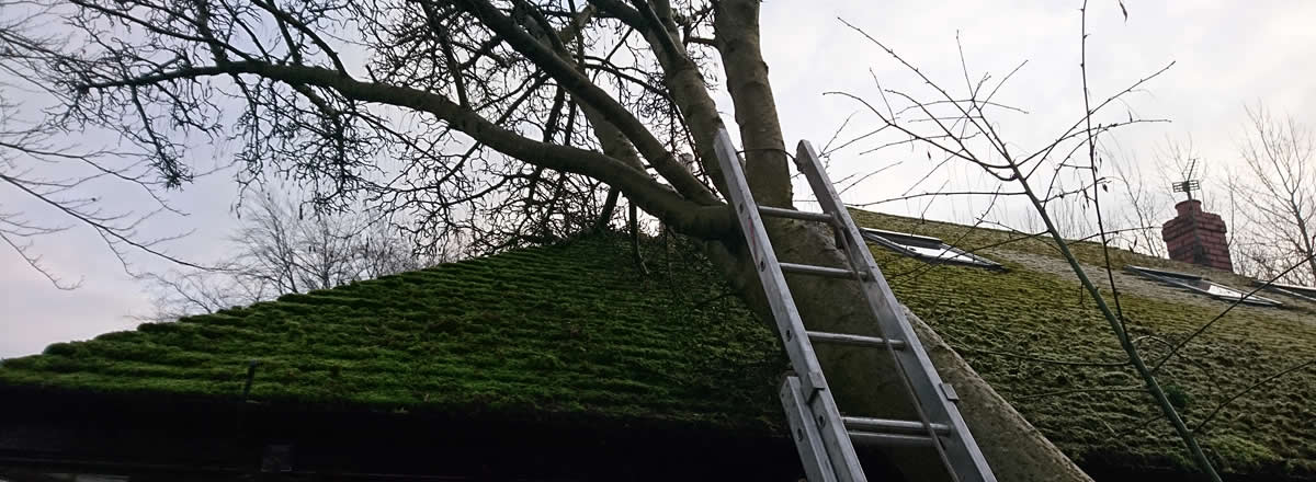 emergency tree removal bolton