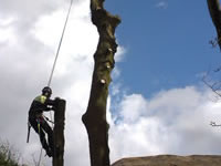 Click to open our tree work gallery