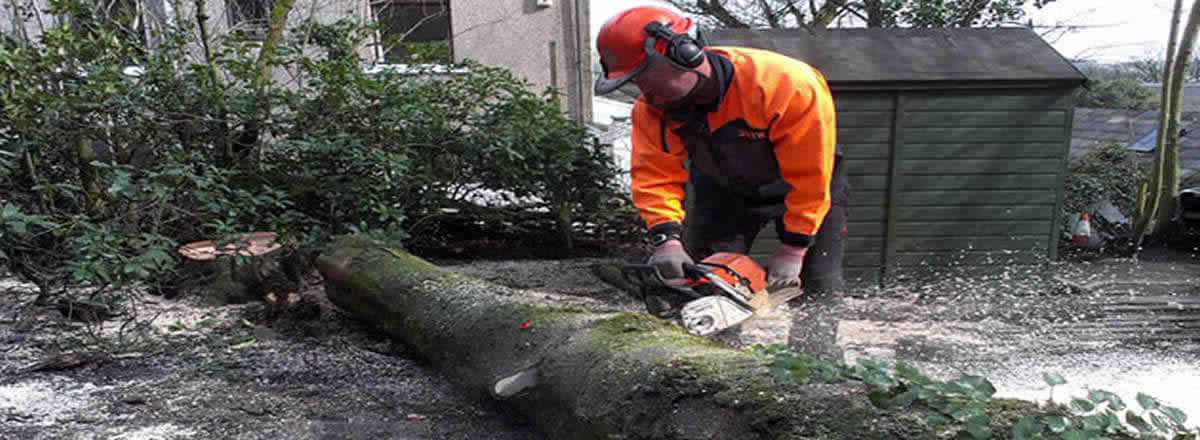 treelation tree service bolton