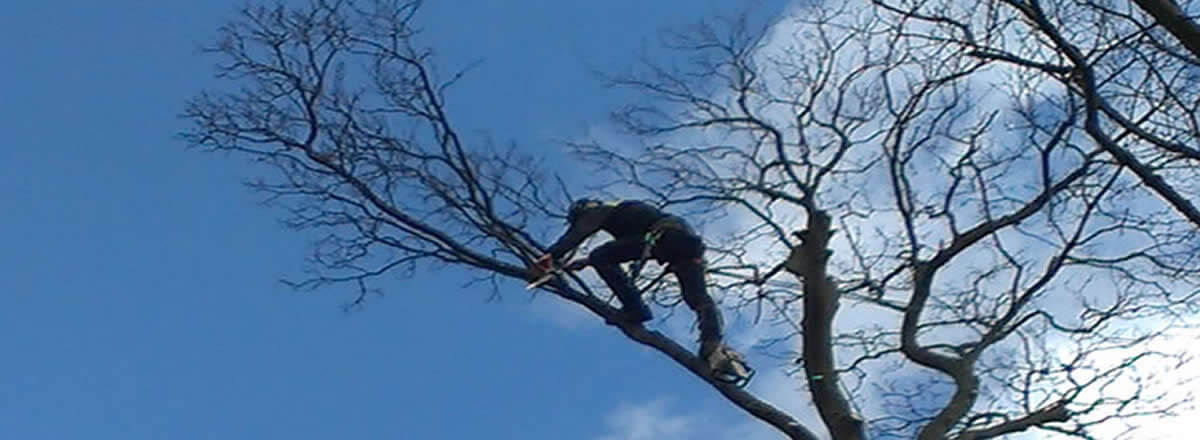 tree trimming and pruning bolton